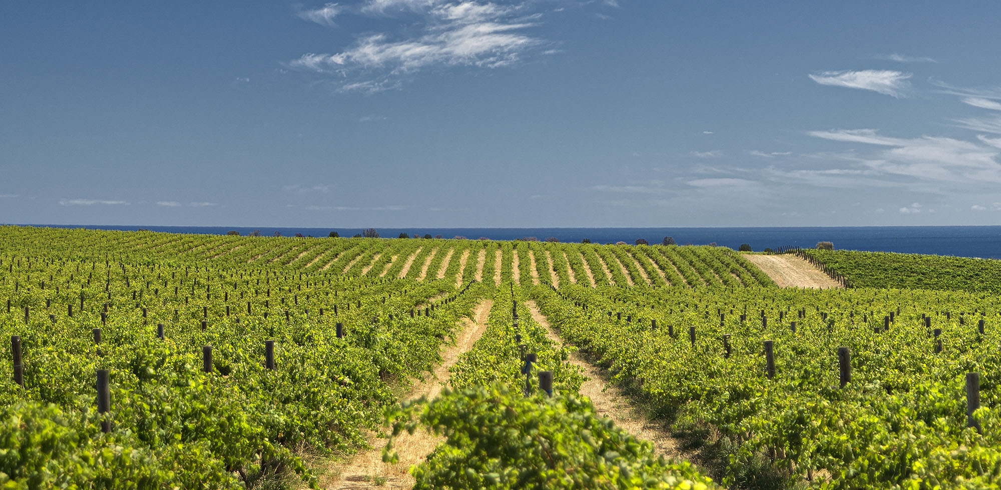 Great Australian Value Wines that You'll Never Find in the U.S.