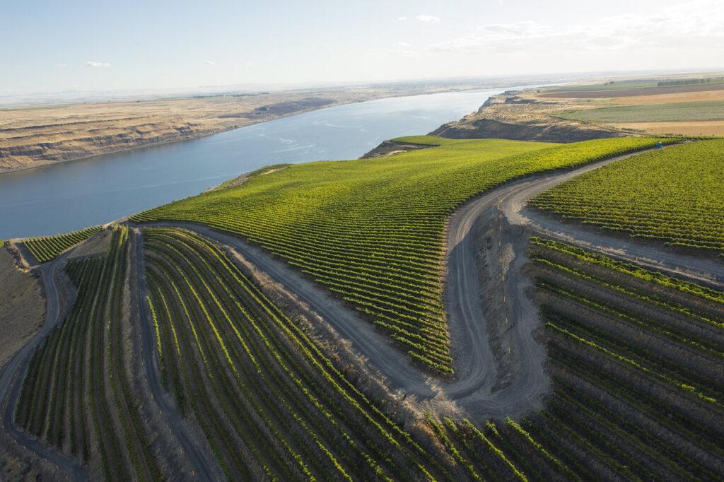 Benches Vineyard